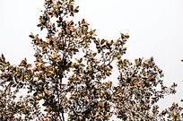 唯美清新樱花大自然高清摄影