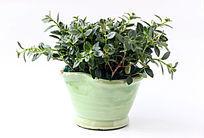 盆栽植物鱼嘴