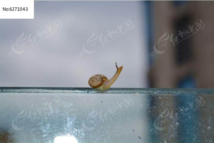 抬头仰望的蜗牛图片,高清大图
