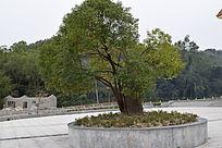公园树木摄影