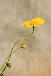 生命力顽强的花