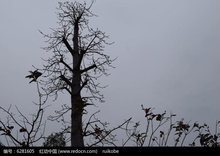 动物植物  花卉花草 树木 蓝天白云 摄影图片