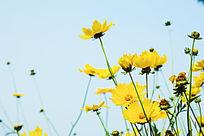 天空为背景的花