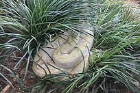 昆明动物园里的白蛇