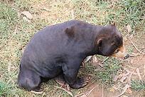 昆明动物园里的狗熊