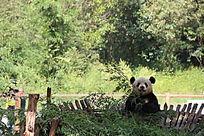 昆明动物园里的一只熊猫