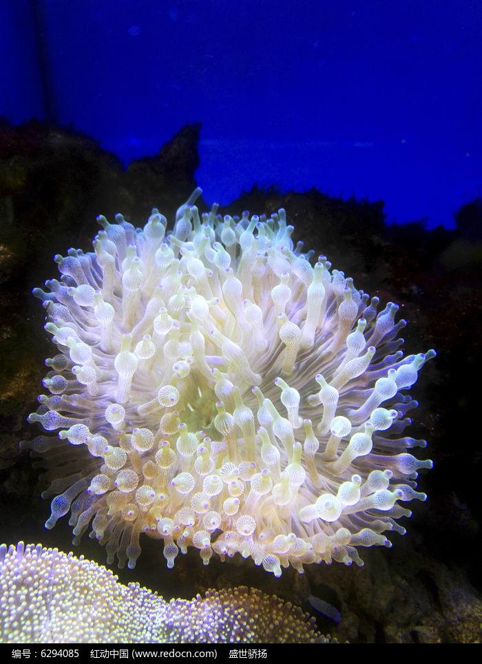 海底软体生物图片,高清大图_空中动物素材