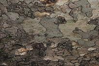 老树皮背景纹理