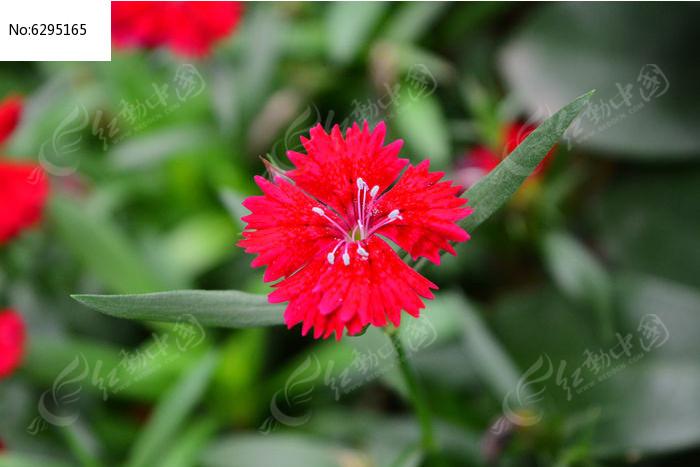 原创摄影图 动物植物 花卉花草 美丽的红花  请您分享: 红动网提供