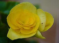 美丽的黄色花朵