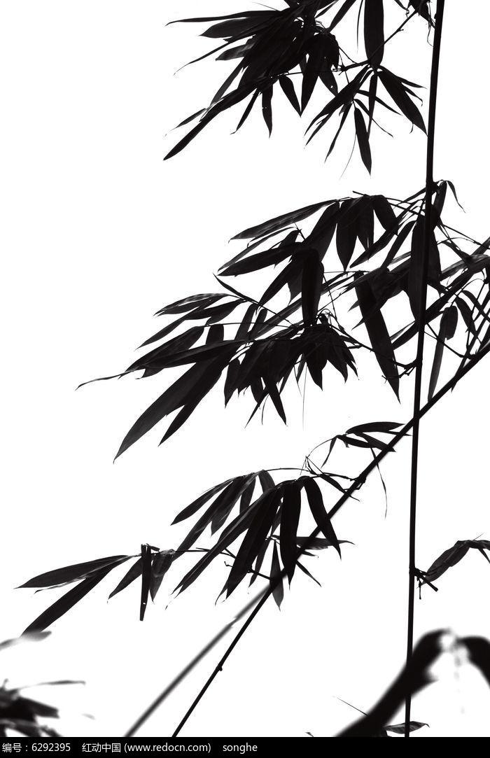 原创摄影图 动物植物 树木枝叶 竹叶剪影