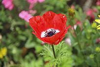 绿丛一束红花
