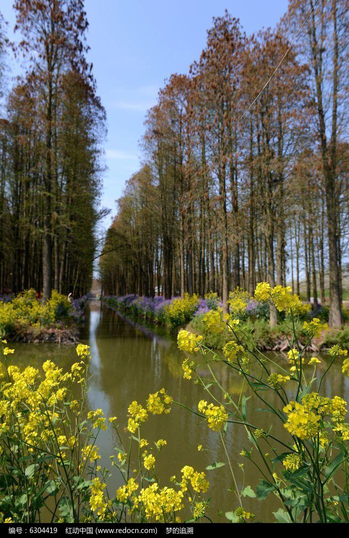 水上森林之春
