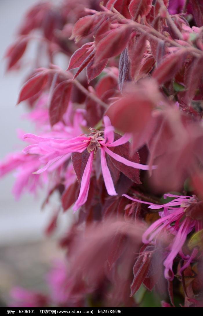 原创摄影图 动物植物 花卉花草 红花