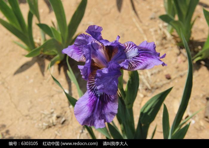 原创摄影图 动物植物 花卉花草 紫色鲜花