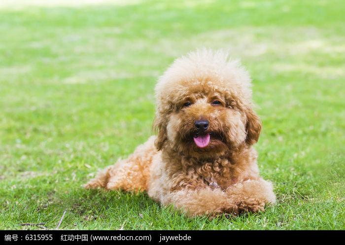 草地上可爱的宠物狗