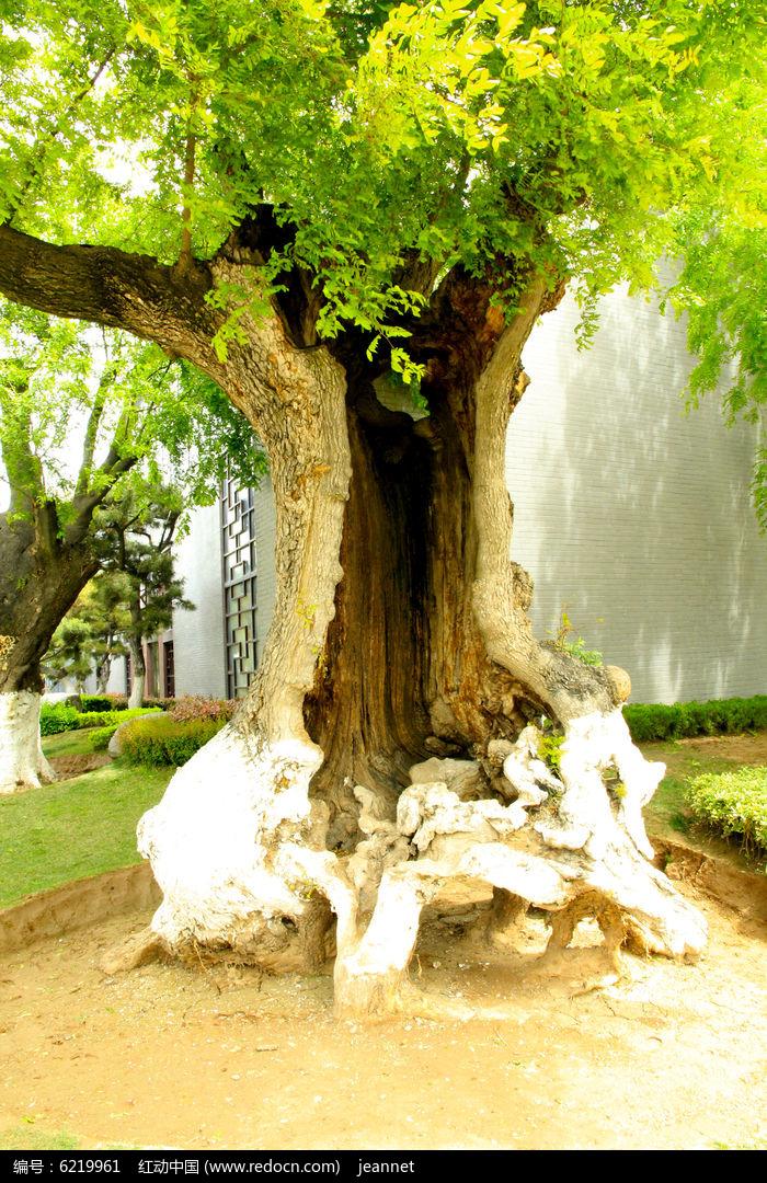 原创摄影图 动物植物 树木枝叶 大树