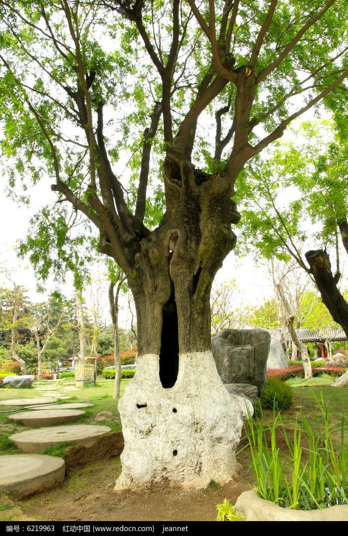 野生唐梨老树盆景