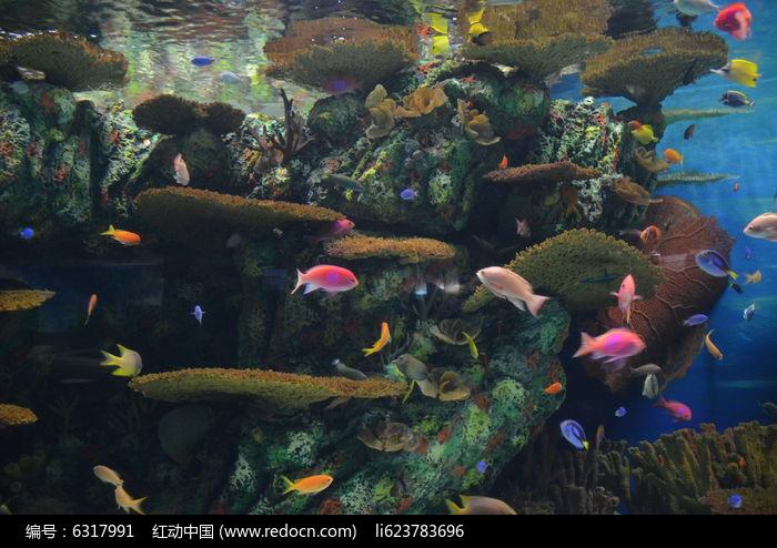 五彩小鱼图片,高清大图_水中动物素材