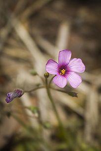 一朵盛开的紫色小花