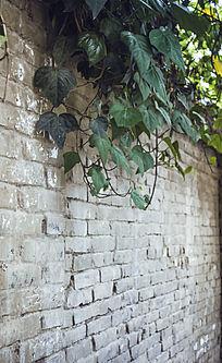 垂满绿萝的破旧砖墙