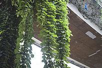 垂在天桥上的巨型藤蔓