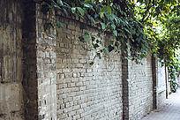 满是绿萝的怀旧砖墙