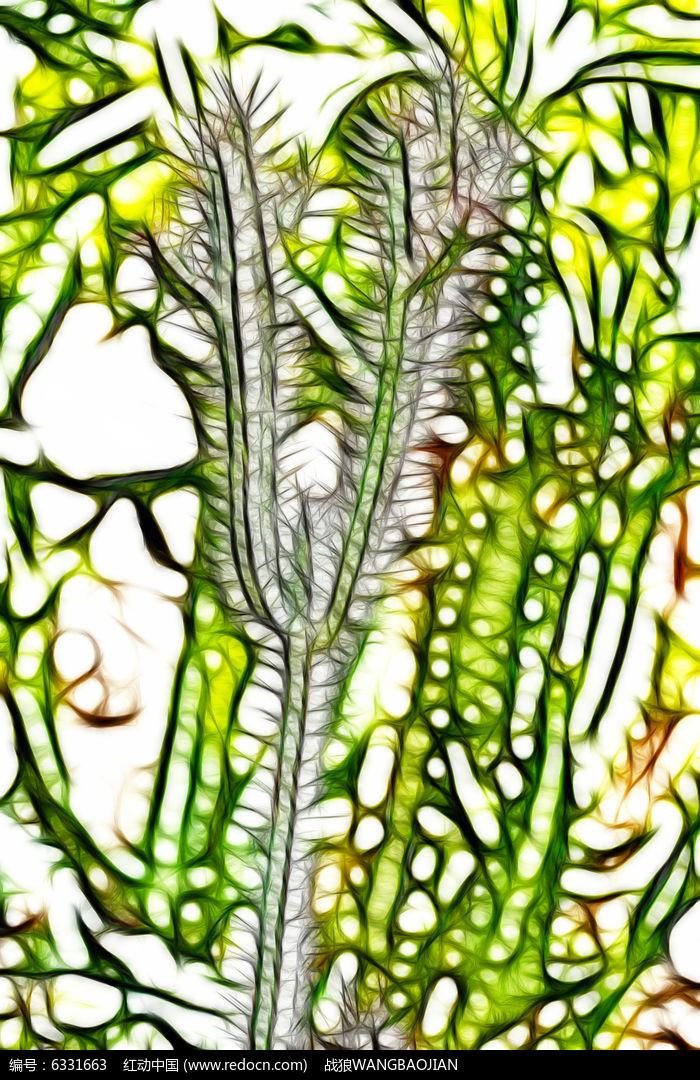 仙人掌  植物 艺术画 插画