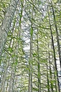 抽象水杉树林艺术画