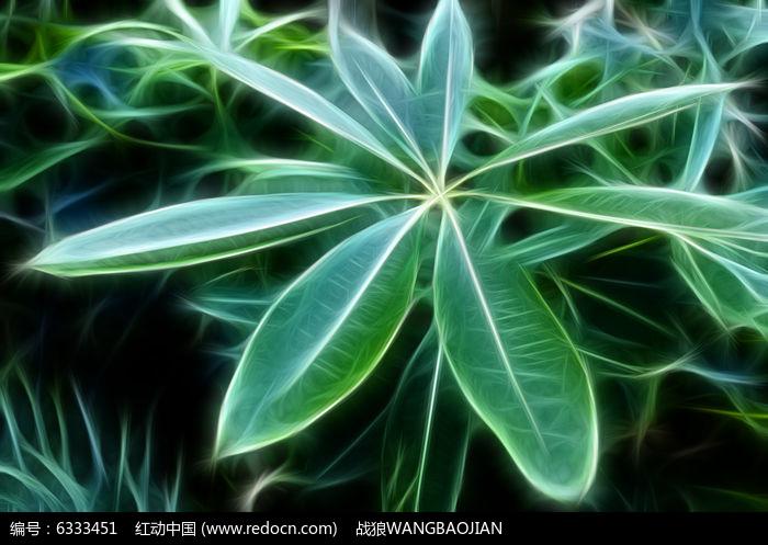抽象糖胶树叶子图片