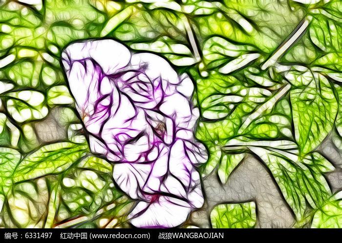 粉色牡丹花艺术插画