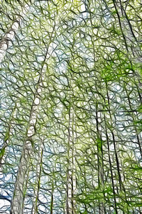 水杉树林抽象插画