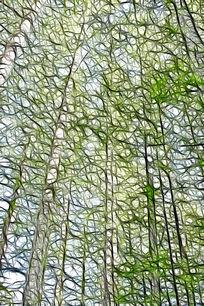 水杉树林抽象画