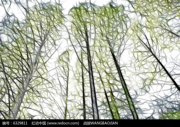 手绘线描柳树图片