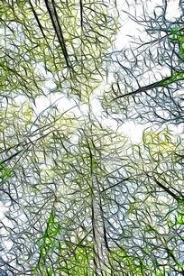 水杉树林线之绘