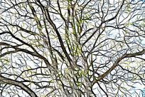 树林树木线条画