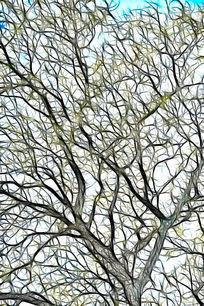 树林线条无框艺术画