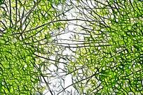 树林叶脉抽象画