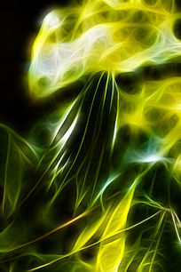 树木枝叶抽象装饰画