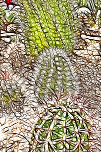 仙人球抽象艺术画