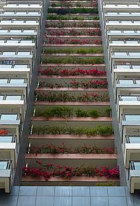 高楼上的花草