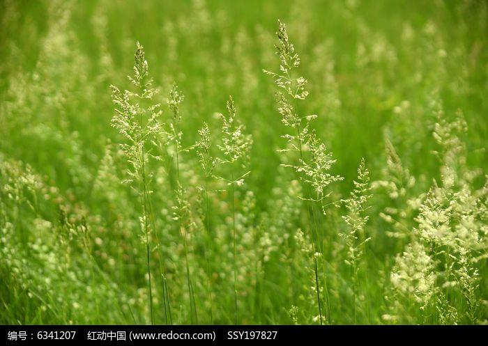 原创摄影图 动物植物 花卉花草 春天的野草  请您分享: 红动网提供