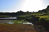 稻田和菜地