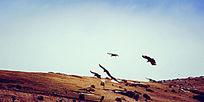 色达晚霞中飞翔的大鹏鸟