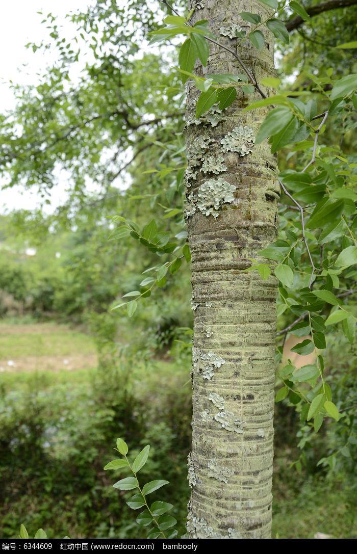 原创摄影图 动物植物 树木枝叶 树杆  请您分享: 红动网提供树木枝叶