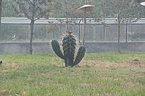 仙人掌雕塑