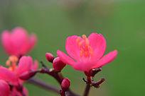 红色动人的鲜花