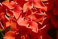 红色美丽的花朵