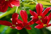 红色向下开放的花朵