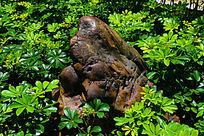 花草中的奇特石头